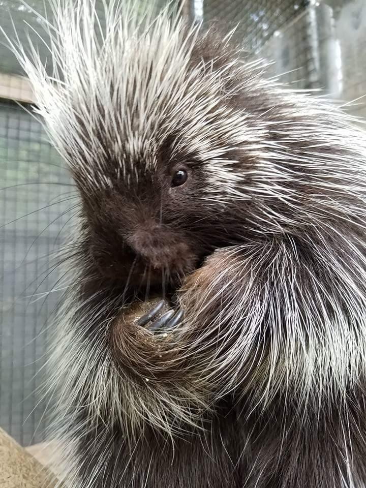 Visit Porcupine