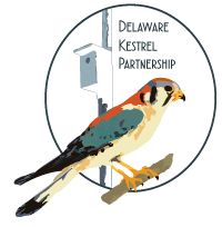 DKP-Logo-web