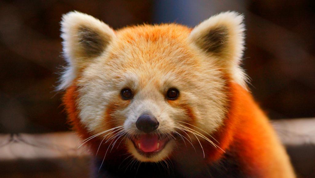panda-enhanced