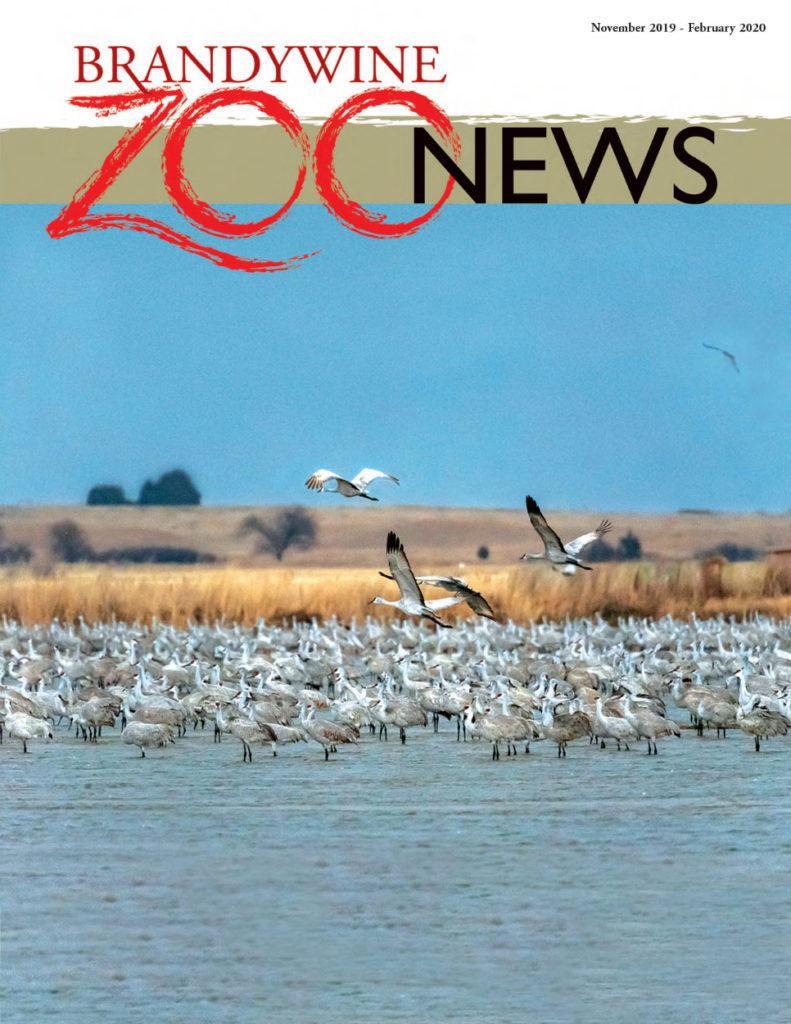 zoo-news-nov-2019-feb-2020