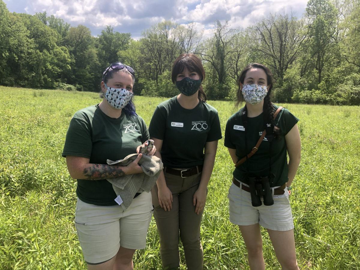 Brandywine Zoo staff with an American kestrel.